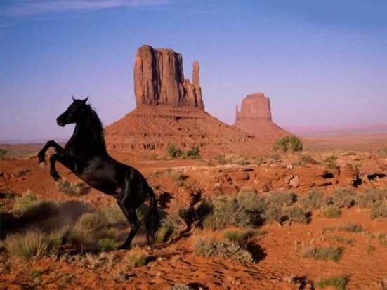 strong-horse-rearing-in-desert.jpg